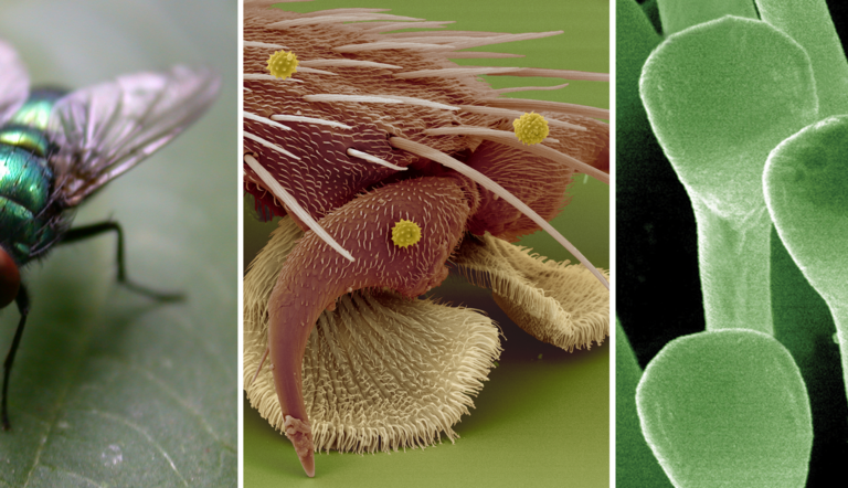 Fly on the ceiling: how insect adhesion research can inspire technology