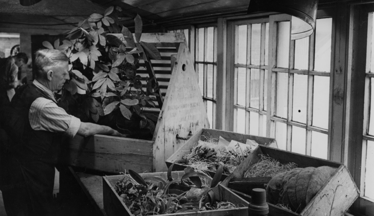 The Wardian Case: A Simple Box that Moved Plants and Changed the World
