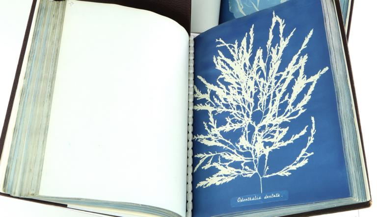 Linnean Lens: Anna Atkins' Cyanotype Impressions