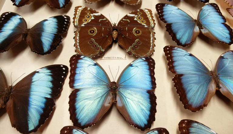'We the Tormentors': Death, Emotions, and Gender in Entomology