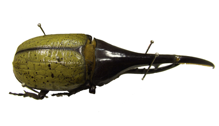 Put a Pin in it: Exploring the Insect Collections of Linnaeus and Smith